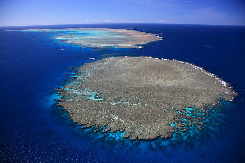 Dank eines relativ kühlen Sommers zeigen die Korallenbänke am Great Barrier Reef Anzeichen von Erholung