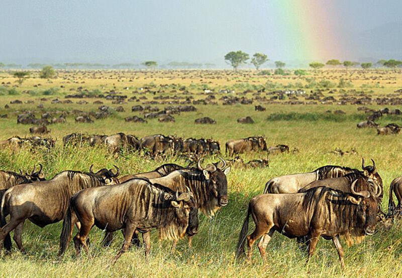 Touristik aktuell tansania: so weit die hufe tragen
